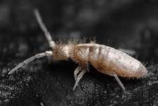 Insecte_1