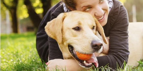 Le chien, meilleur ami de l'Homme