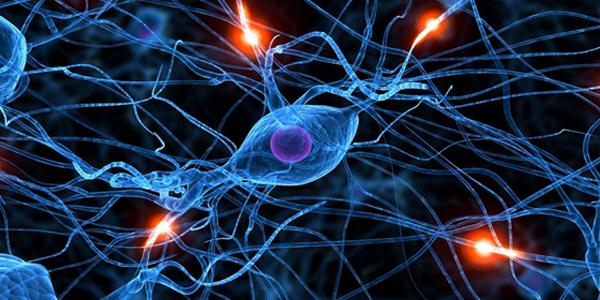 neurosciences-ecole